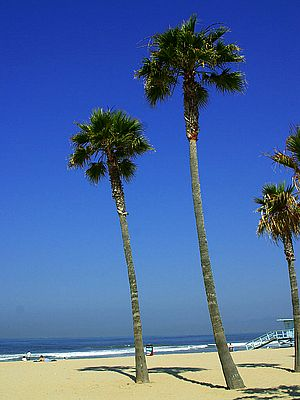Beach-palm-trees